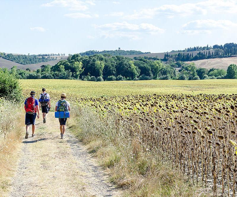 via francigena - cammino